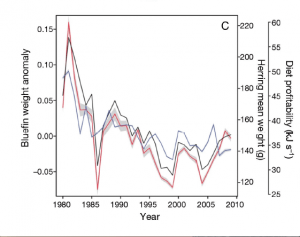 Fig. 6: Here, bluefin tuna weight anomalies (blue) are plotted against mean herring weight (red) and diet profitability (black). There is a strong correlation between bluefin weight anomalies and diet profitability.