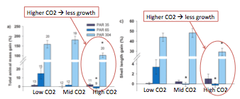 Figure 4 – Growth of the clams in terms of mass (a) and length (c). The light blue bars represent the highest light conditions. Clams that were grown in the medium and high CO2 levels grew less than the clams grown in low CO2 levels.