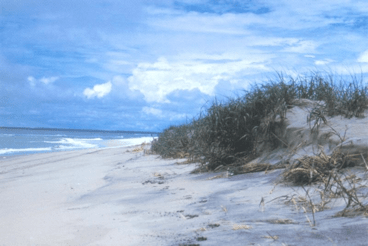 Photo of Assateague Island by the National Park Service.