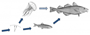 Fig. 2: Food-web, well, it's not quite this simple. But diversity in an ecosystem could prove helpful.