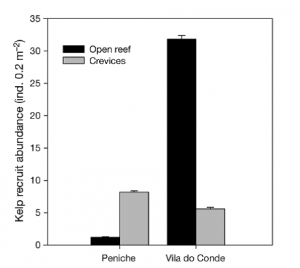 Figure 3 – The number of recruits in the warmer central region (Peniche) compared to cooler northern region (Vila do Conde), and in open reef spaces (black bars) compared to crevices (grey bars).