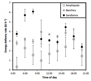 Delivery of high/low energy prey items, separated by time of day as observed from 1998-2011. Hours of decreased light were excluded as prey were rarely delivered to nests during these hours.