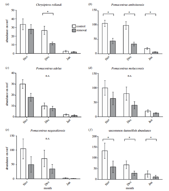 Figure 3. a-e) Individual common species of damselfish recruits. f) recruits of uncommon species. White bars indicate control reefs and gray ones show removal reefs. Asterisks indicate statistically significant differences between control and removal reefs.