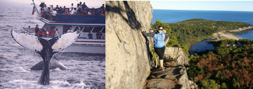 Figure 1 – Outdoor activities tourists can do in Mount Desert Island: whale watching and hiking