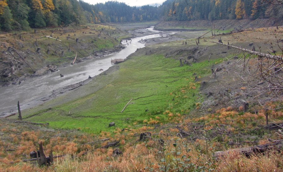 Figure 4 – Upstream of the Elwha dam in October 2012 after dam removal. This used to be a large lake of impounded water behind the dam. Native vegetation is being seeded along the restored river banks. (Photo by By Andy Ritchie from Port Angeles, WA, United States. Cropped and color-corrected by Daniel Case prior to upload, https://commons.wikimedia.org/w/index.php?curid=22407955)