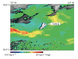 Fig. 5: This satellite image shows an iceberg in the Southern Ocean and the chlorophyll concentration around it. Notice the warm colors trailing the iceberg. Those warm color indicate higher concentrations of chlorophyll.