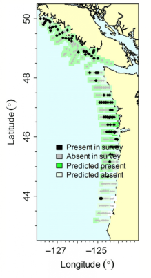Figure 2: The study compared real survey data of sardine abundance to forecasted abundance based on the model, and organized by a ROMS grid. Credit: Kaplan, I.C., et al.
