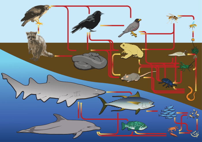 "Figure 1 – An example diagram of marine and terrestrial food webs. Notice how no arrows connect any organisms in the sea with any organisms on land. This study steps outside of this traditional simplification and addresses a link between these two types of food webs. (Image by ""LadyOfHats"" from Wikimedia creative commons CCO 1.0, https://commons.wikimedia.org/wiki/File:Food_web_diagram.svg)"