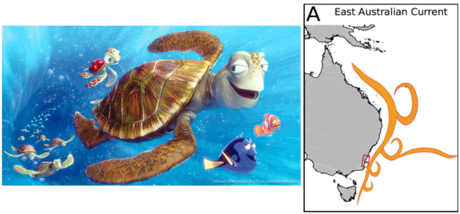 Left: Still image from Disney Pixar's Finding Nemo showing the exaggerated speed of the East Australian Current moving south along the west coast of Australia. Right: Extent of East Australian Current. (Part of Figure 1 in the paper.)