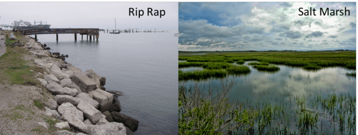 Figure 1: A rip rap and salt marsh, two different types of shoreline.