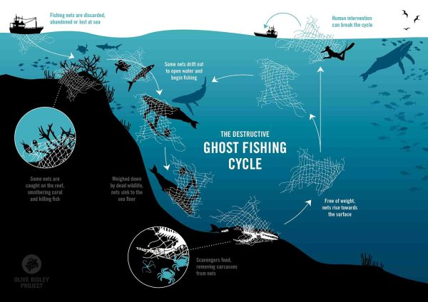Fig. 1. Ghost Fishing Cycle. Source: Olive Ridley Project.