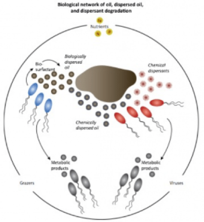Figure 2: Breakdown of chemically and microbially dispersed oil (Source: Joye et al., 2016)