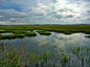 Fig. 6. Salt Marsh, Cumberland Island, Georgia Source: Trish Hartmann, Wikimedia Commons