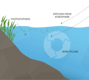 """Fig 1. Processes involved in dissolved oxygen generation in water bodies. Fondriest Environmental, Inc. """"Dissolved Oxygen."""" Fundamentals of Environmental Measurements. 19 Nov. 2013. Web."""
