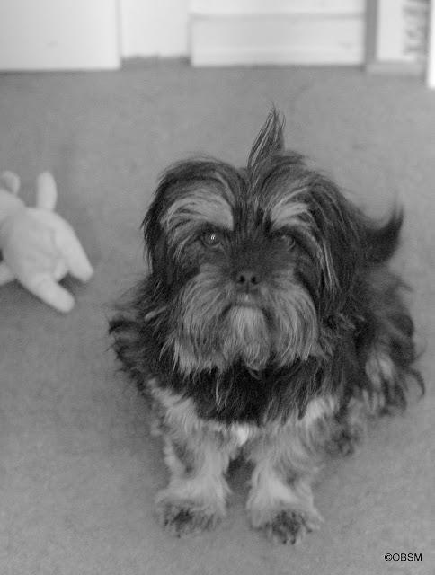 hund_adoptieren-strassenhund_retten_rumänien-oceamblue-style.jpg