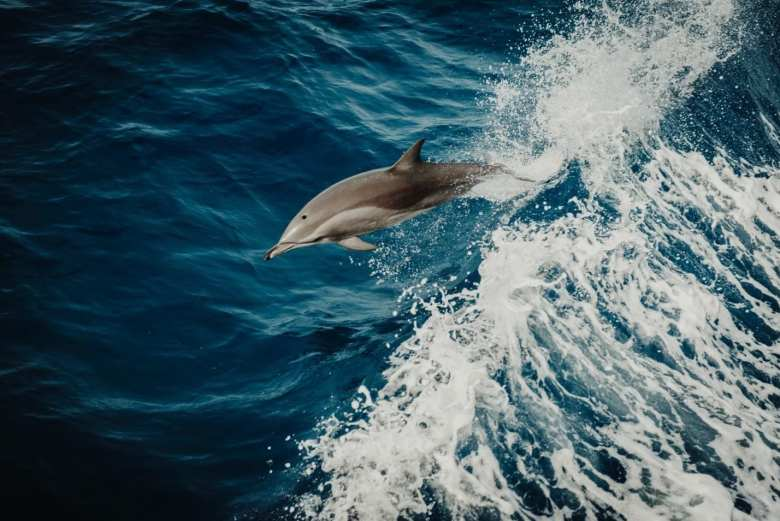 The Incredible Lives of Dolphins Facts and bottlenose dolphin facts