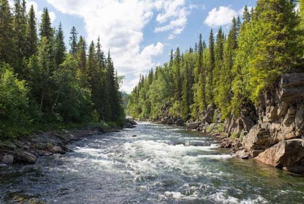willamette-river-cleanup