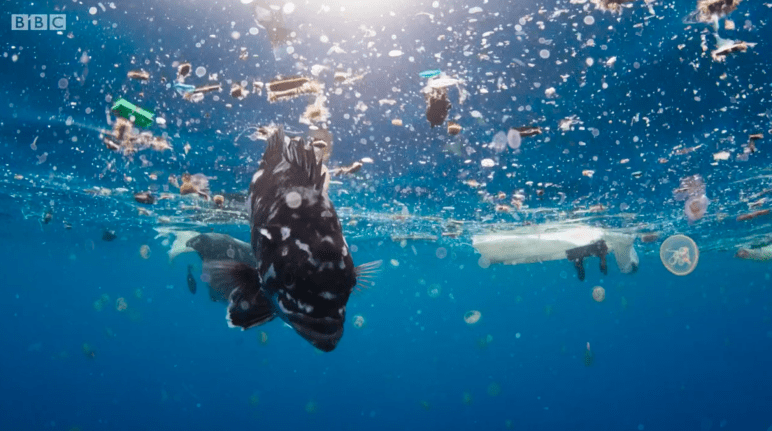 Under a business-as-usual scenario, there will be more plastic than fish (by weight) by 2050. Plastic packaging plays a major role in the amount of plastic entering the oceans.