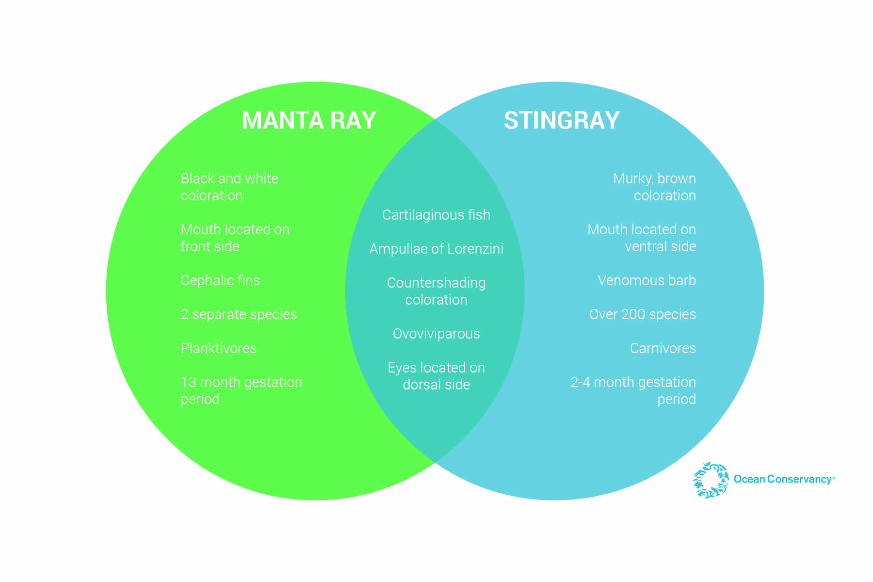 hight resolution of there is so much more to learn about stingrays and manta rays as well as similar groups like skates guitarfish and butterfly rays