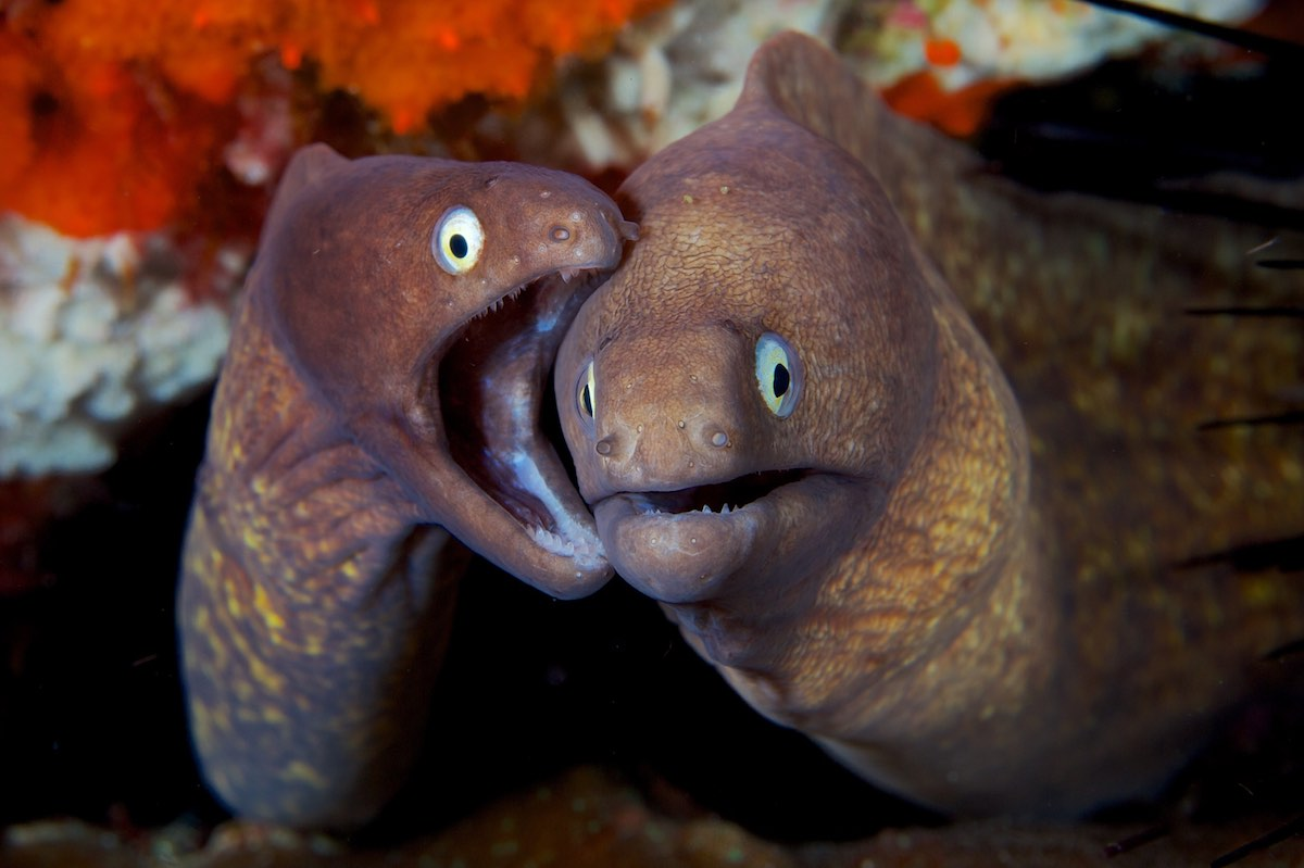 The Difference Between Electric Eels and True Eels  Ocean