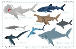 FINconceivable a beautiful kid friendly animated short documentary about Sharks and their role in the Ocean Ecosystem / Ocean Great Ideas