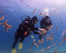 How a Florida Hero rebuilds endangered Coral Reefs / Ocean Great Ideas