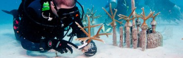 How a Florida Hero rebuilds endangered Coral Reefs / Ocean Great Ideas