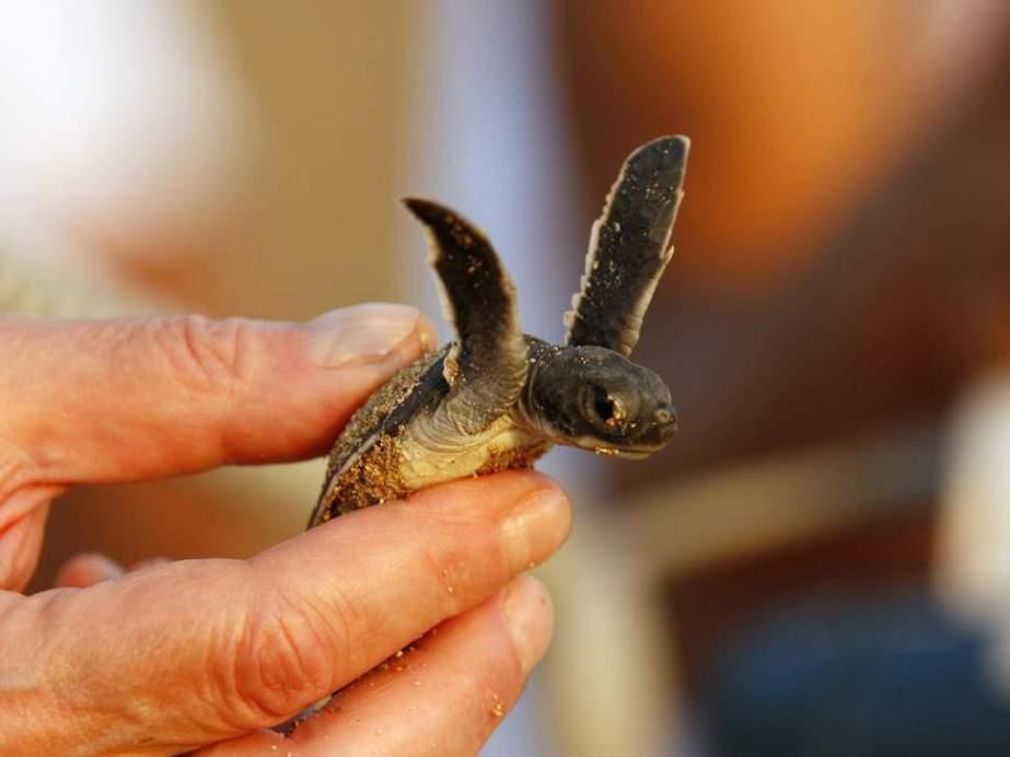 baby-turtle-hand