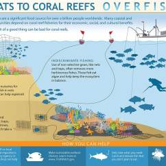 Coral Reef Food Chain Diagram Warn Ce M8000 Wiring How Does Overfishing Threaten Reefs