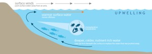 Upwelling Controls HAB Movement toward Pacific NW Coast  NCCOS Coastal Science Website