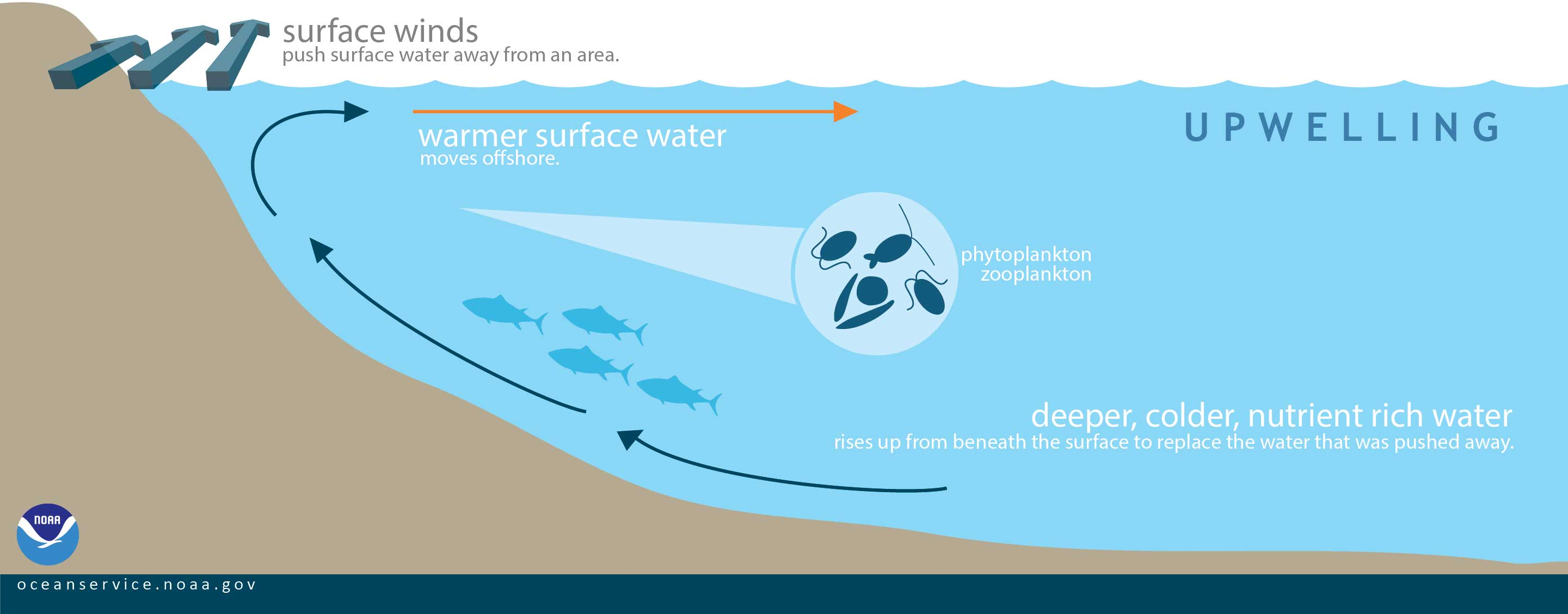 What Is Upwelling