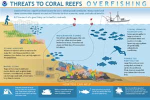 How Does Pollution Threaten Coral Reefs?
