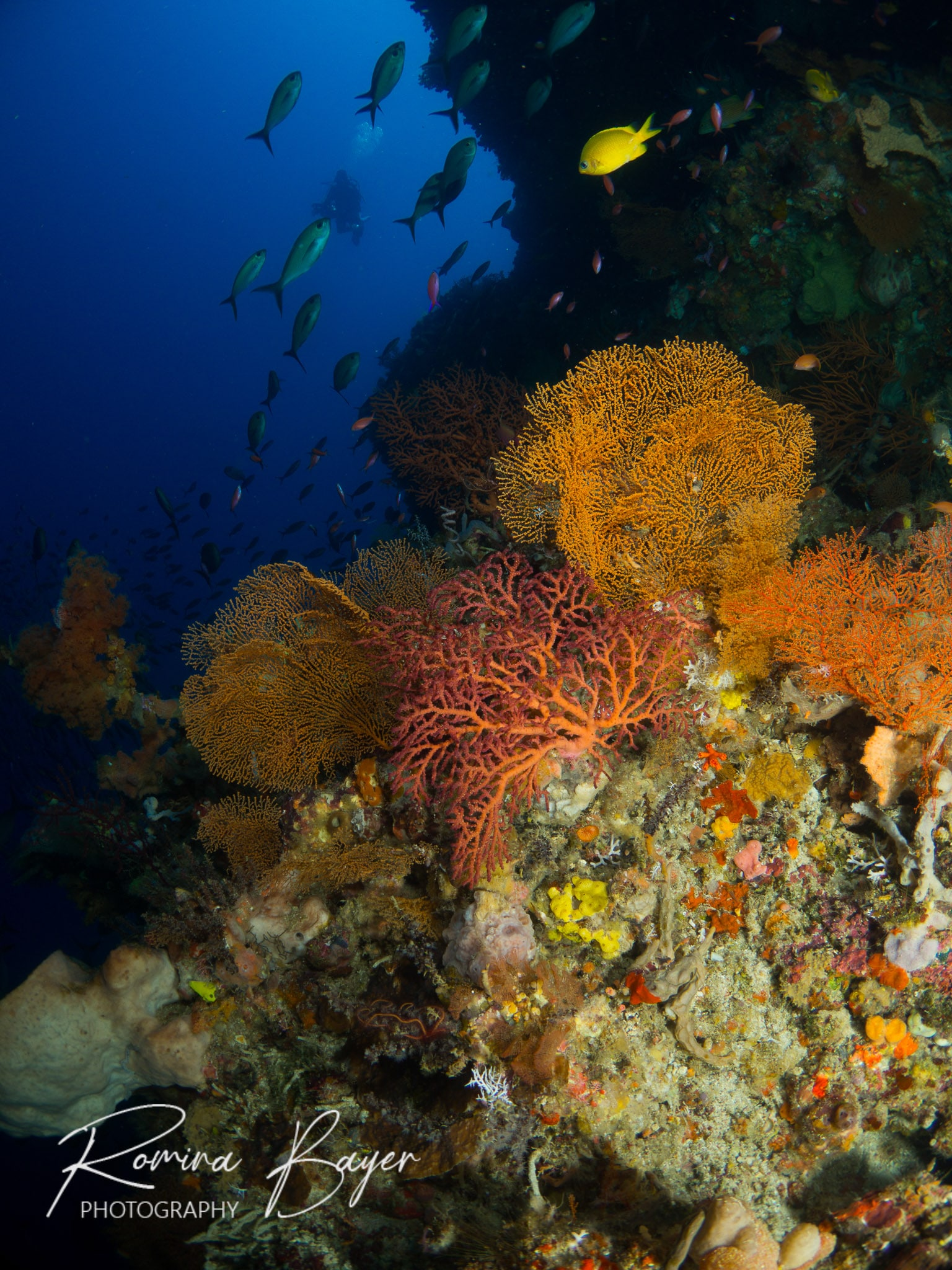 Colorful reef in Alor, Indonesia