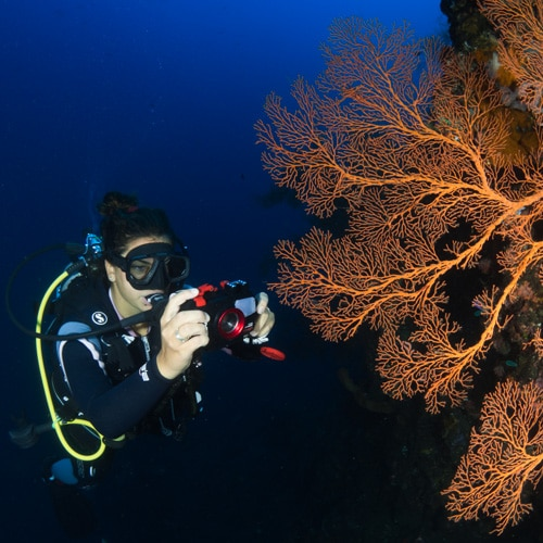 Becoming a Responsible Underwater Photographer
