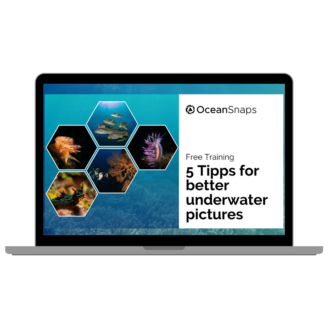 Free Training: 5 Tips for better underwater pictures