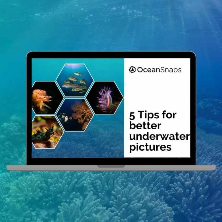 Underwater Photo Training