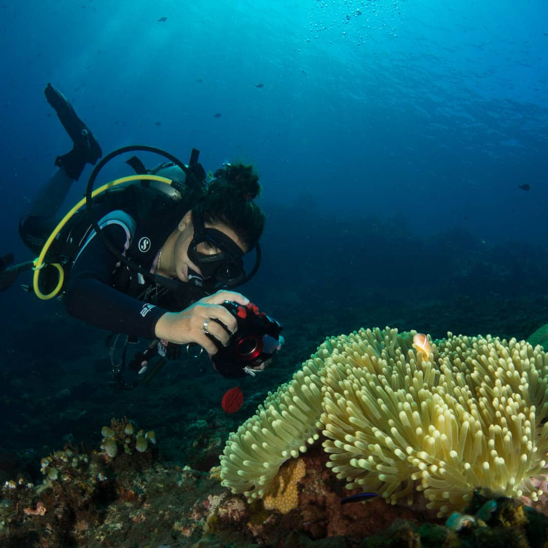 Underwater photography assignments