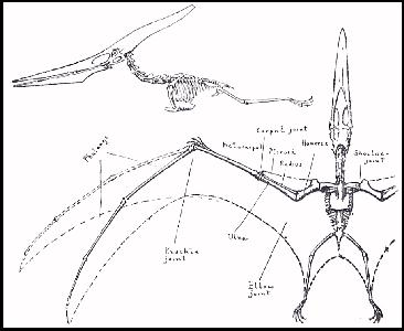Field Guide, Part 4; Pteranodons and Birds