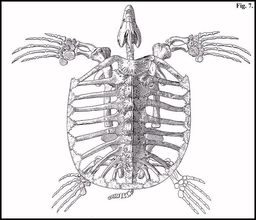 Field Guide, Part 3; Marine reptiles
