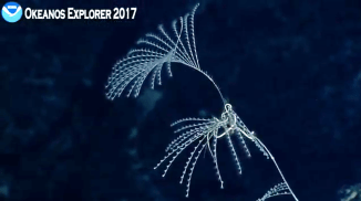 coral_slender-Screenshot 2017-03-12 16.33.05