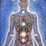 alex_grey_chakras