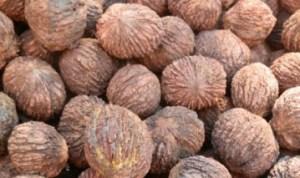 Скорлупа черного грецкого ореха