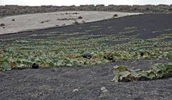 Tiagua-Caleta de Famara