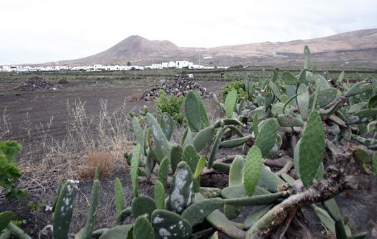 Mala, Lanzarote