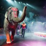 The Circus is Coming to Orange County