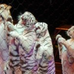 Family Guide to the Ringling Bros. and Barnum & Bailey Circus