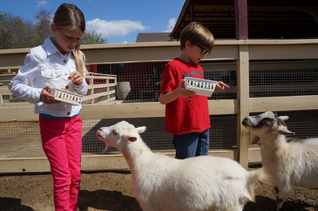 Feeding animals at petting zoo