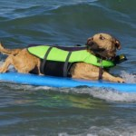 Dogs Hang Ten at Huntington Beach Pier