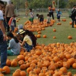 Families Enjoy Things to do in Orange County at the Great Park Pumpkin Harvest