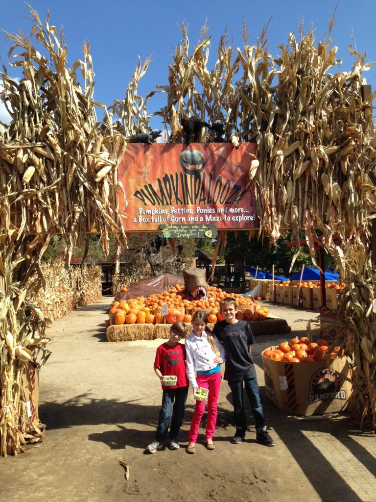 Pumpkinpalooza at Zoomar's Petting Zoo